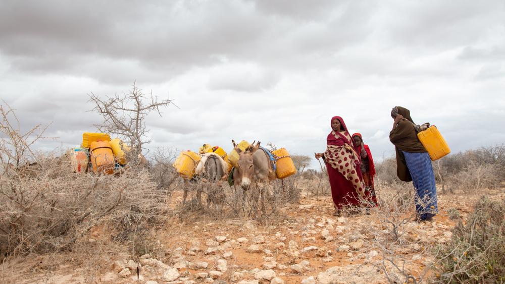 В Кении запретили коммерческое истребление ослов