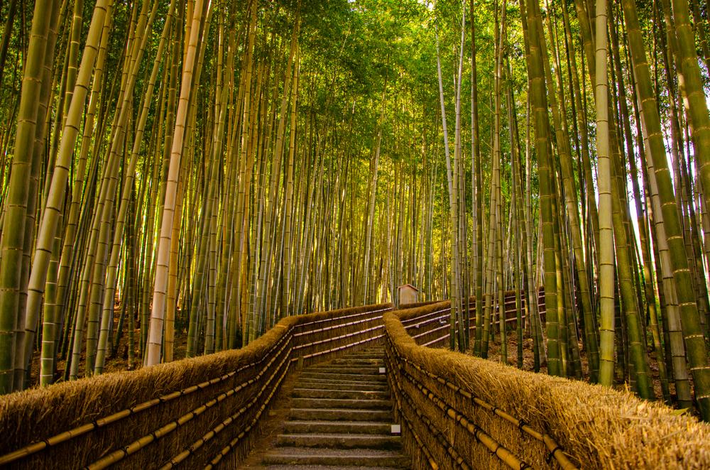 В Киото запустили туристическую кампанию «Пустота».Вокруг Света. Украина