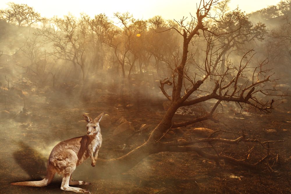 113 видов животных Австралии нуждаются в экстренной помощи