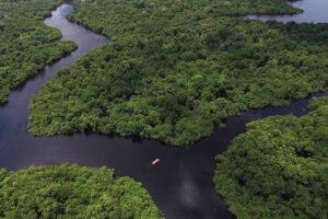 Пятая часть лесов Амазонии выделяет СО2 больше, чем поглощает
