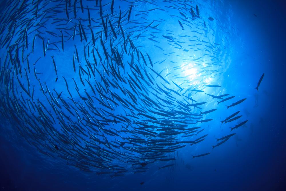 Австралийские океанологи создадут морские заповедники