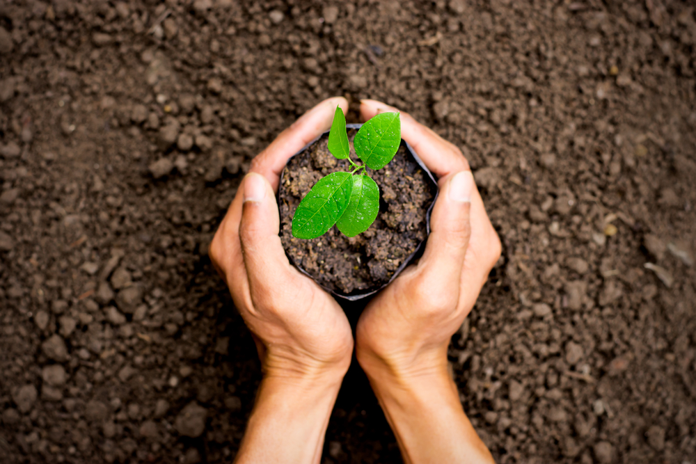 В Украине за день посадят 5 миллионов деревьев