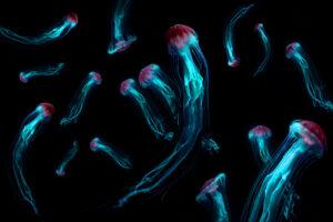 Ученые будут исследовать океан с помощью медуз-киборгов