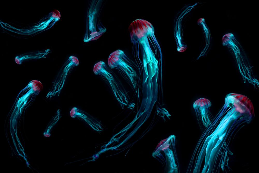 Ученые будут исследовать океан с помощью медуз-киборгов.Вокруг Света. Украина