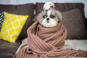 В Ухане спасают домашних животных, оставшихся без хозяев