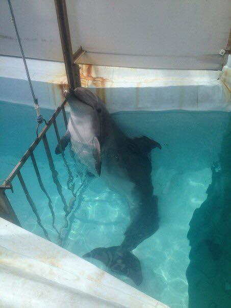 Чи справді допомагає дельфінотерапія при ПТСР?.Вокруг Света. Украина