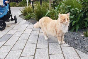 Город как игровая площадка: домашний кот стал знаменитостью новозеландской столицы