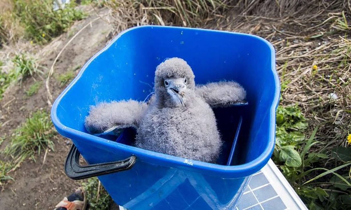 Таксистка из Новой Зеландии собрала команду волонтеров, чтобы по ночам спасать птиц.Вокруг Света. Украина