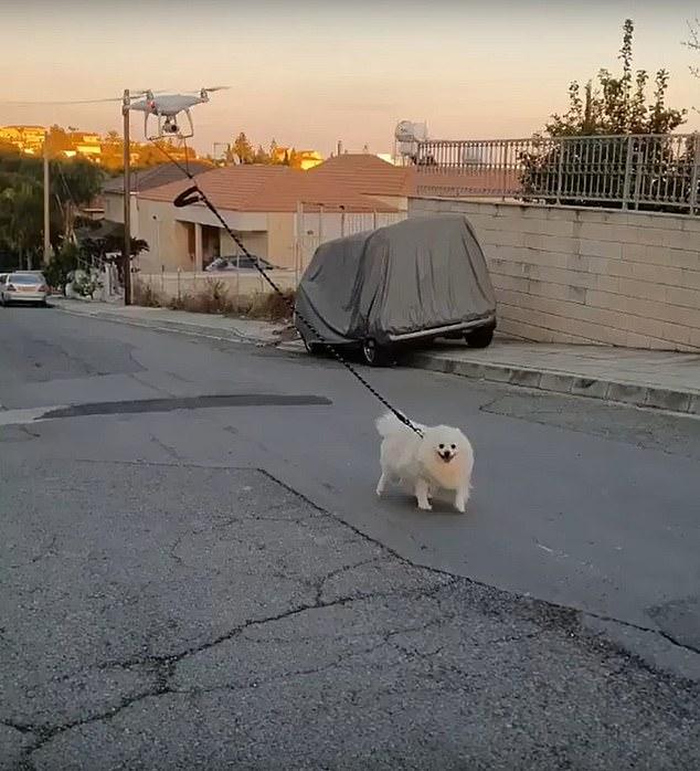 Мужчина выгулял собаку дистанционно с помощью беспилотника (видео)