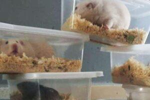 В Англии неизвестный выбросил 20 хомяков в контейнерах для еды