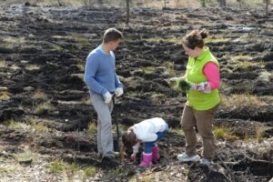Под Киевом высадили 100 тысяч деревьев