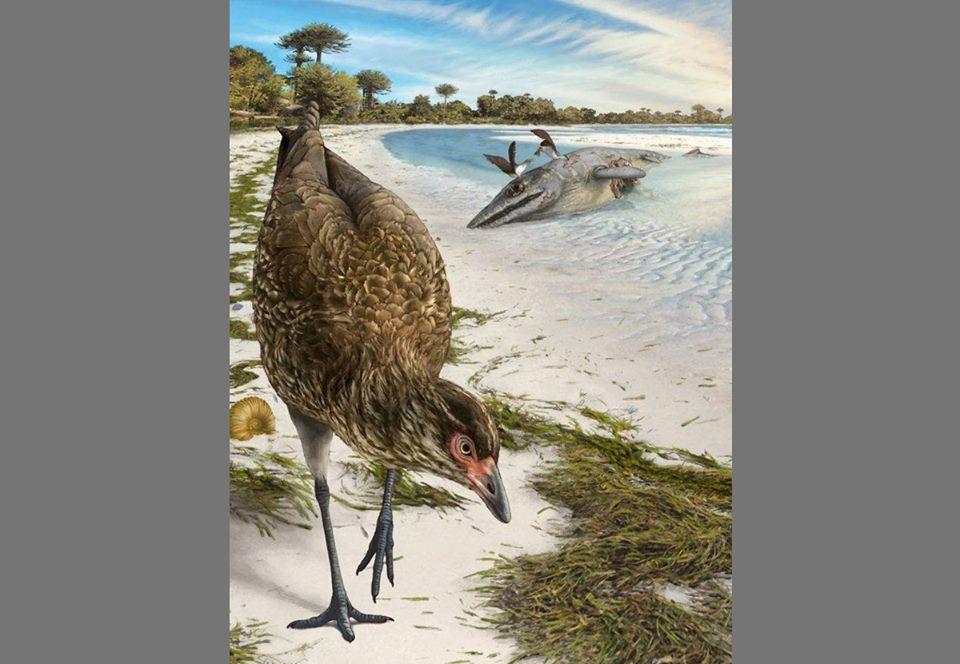 «Чудо-курица»: ученые нашли предка всех птиц.Вокруг Света. Украина