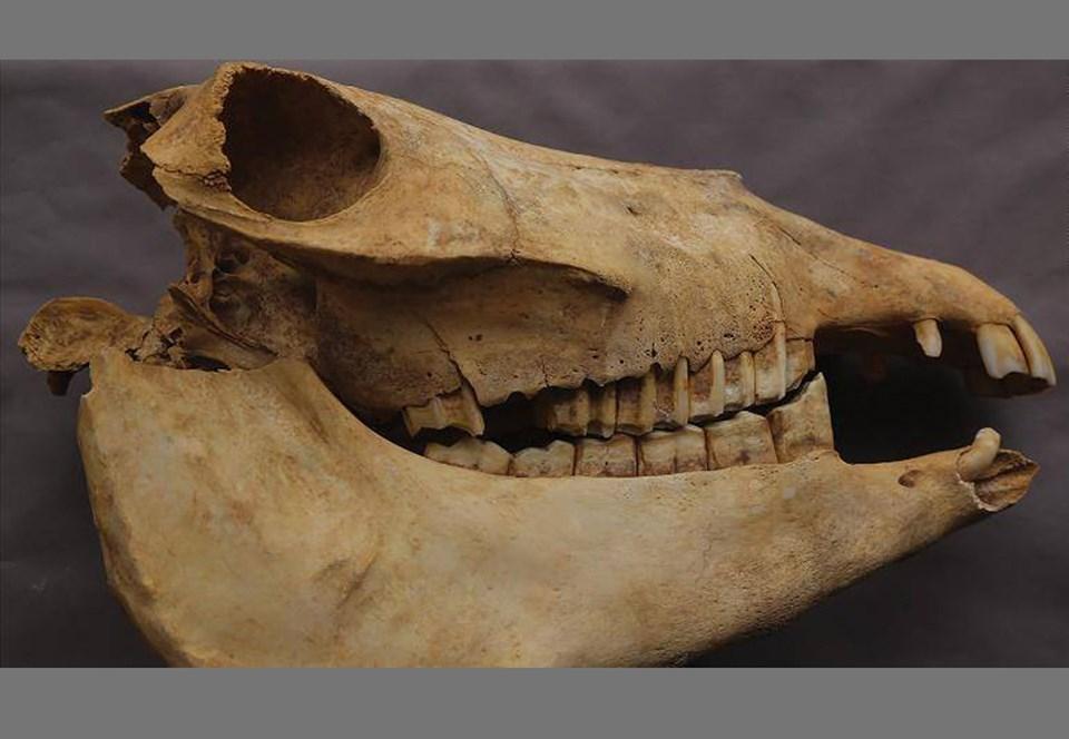 В древнем Китае дворянку похоронили вместе с ослами
