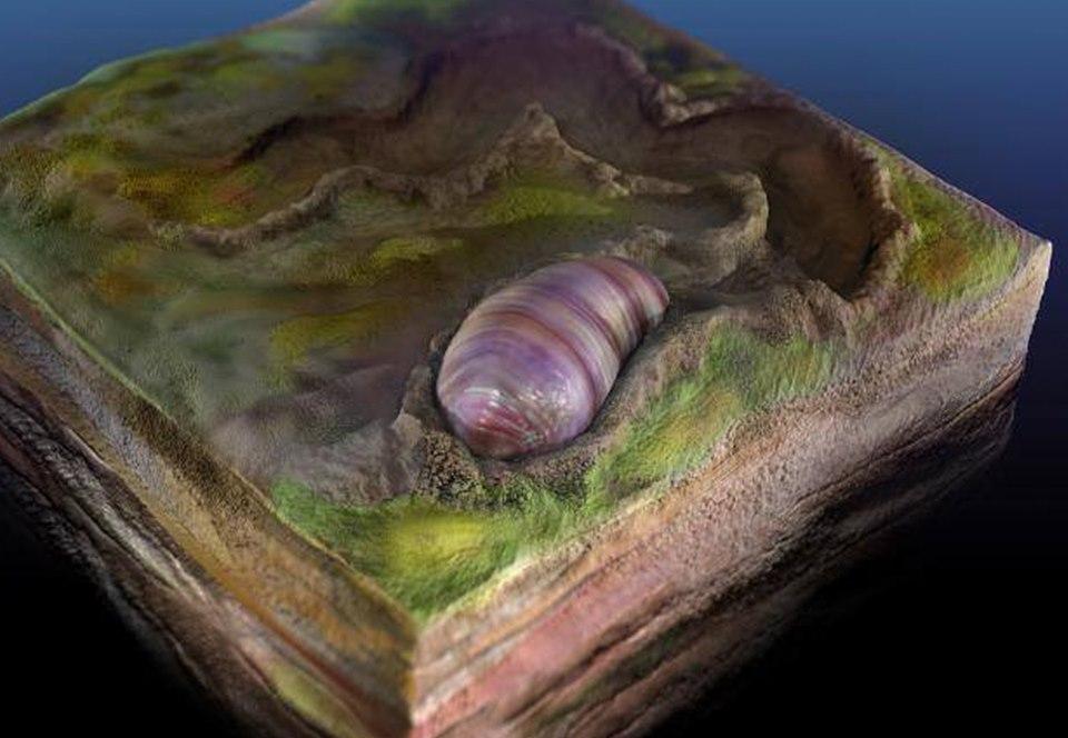 В Австралии найден червеобразный предок всех животных и человека.Вокруг Света. Украина