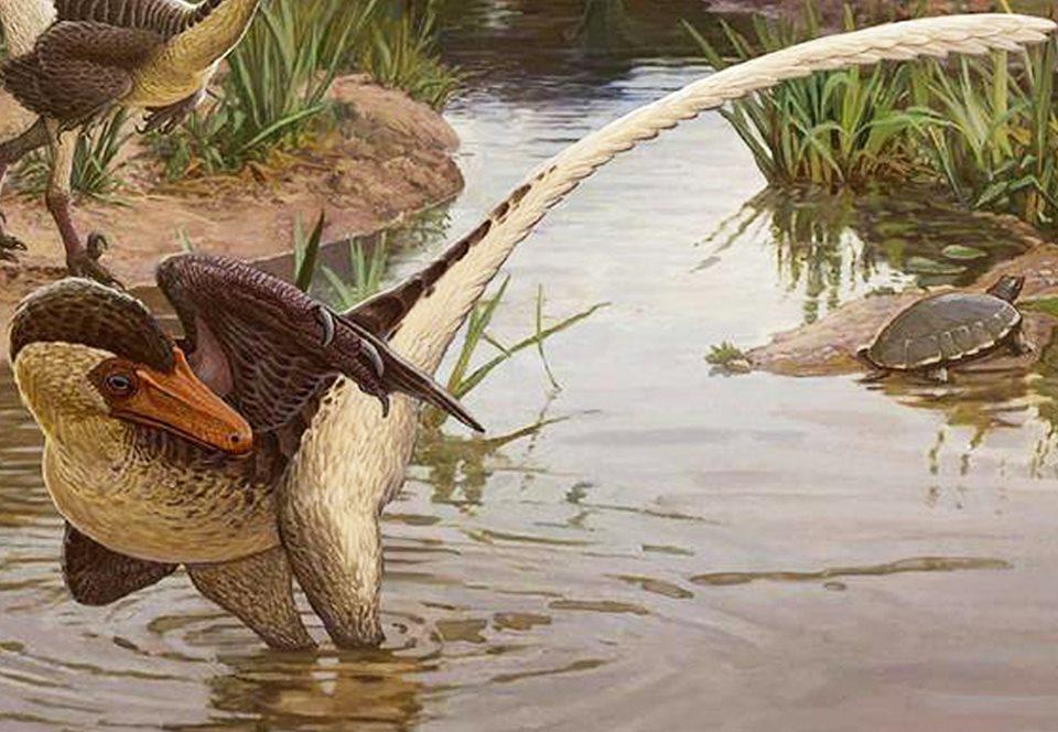 Обнаружен новый пернатый динозавр с хвостом-кнутом.Вокруг Света. Украина