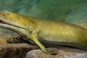 В Канаде нашли ископаемую рыбу с пальцами