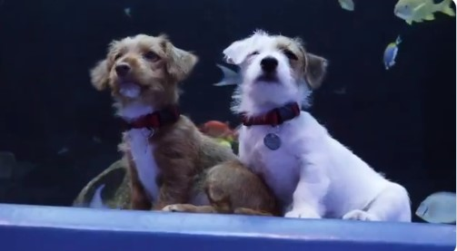 Щенкам из приюта провели экскурсию в океанариум