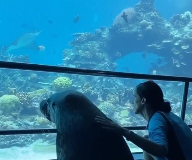 Морской лев осматривает океанариум