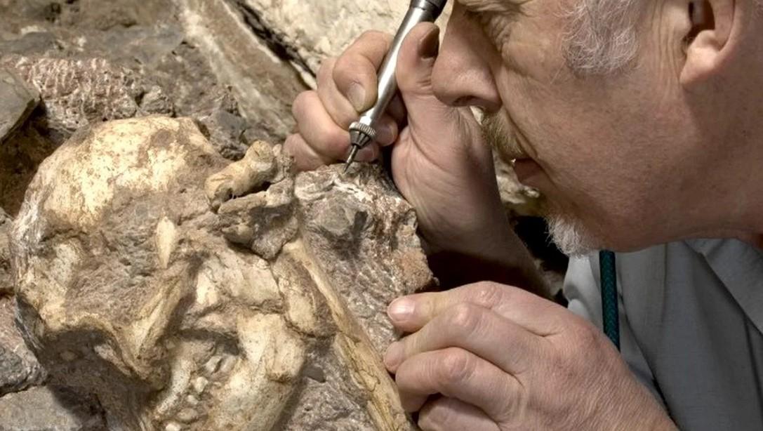 Позвонок раскрыл образ жизни древнего Литтл Фута