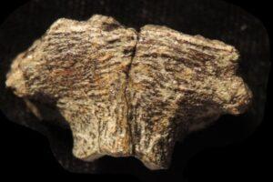 Палеонтологи впервые нашли ДНК динозавра. Скорее всего