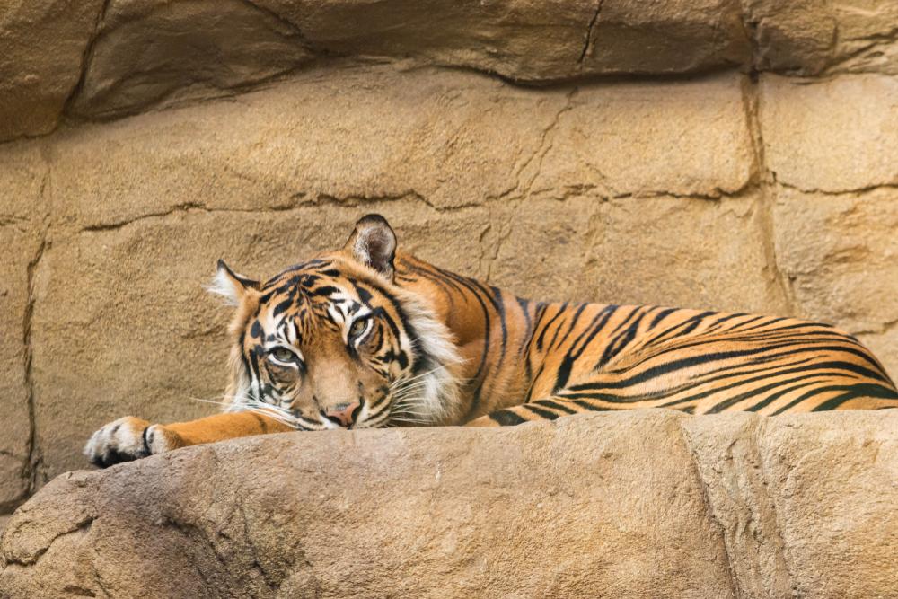 Животные Лондонского зоопарка рискуют умереть от голода