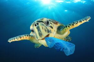 Почему морские черепахи путают пластик с едой? – исследование