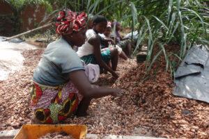 Обильные ливни спасут урожай какао в Кот-д'Ивуаре
