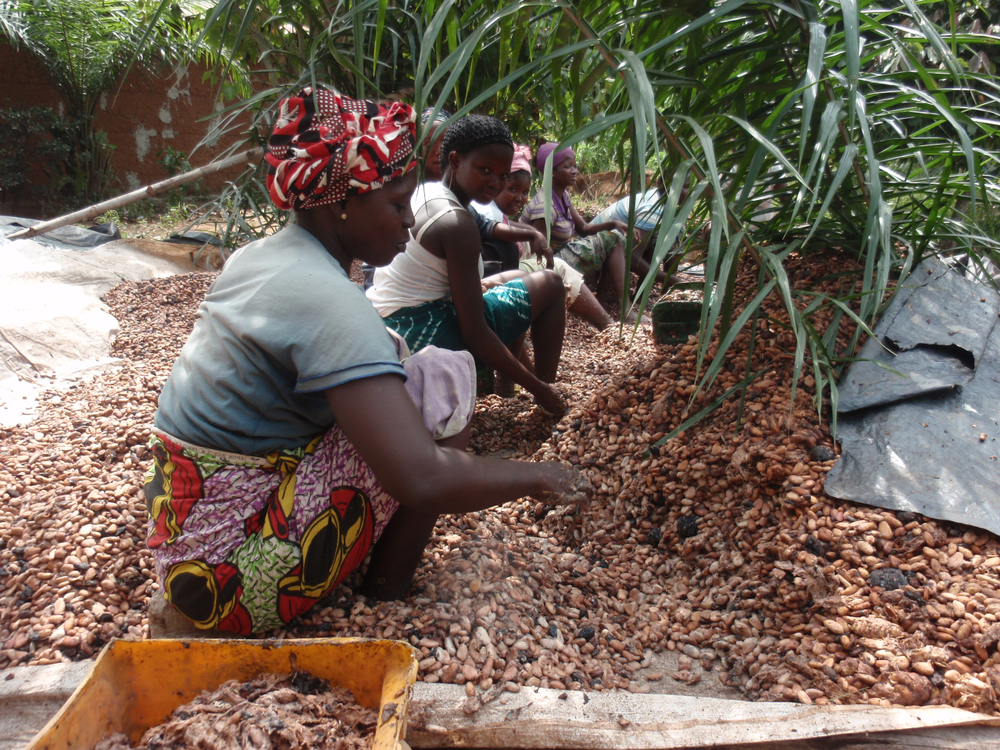 Обильные ливни спасут урожай какао в Кот-д'Ивуаре.Вокруг Света. Украина