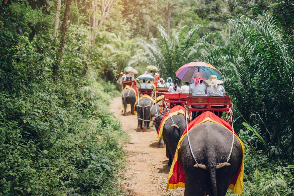 В Таиланде из-за коронавируса слоны впервые ушли в отпуск