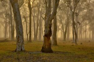 Спутник размером с чемодан предупредит Австралию о лесных пожарах
