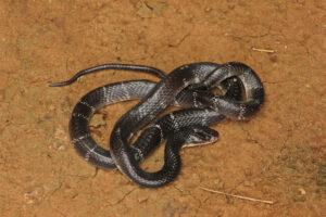Почему змеи ядовитые