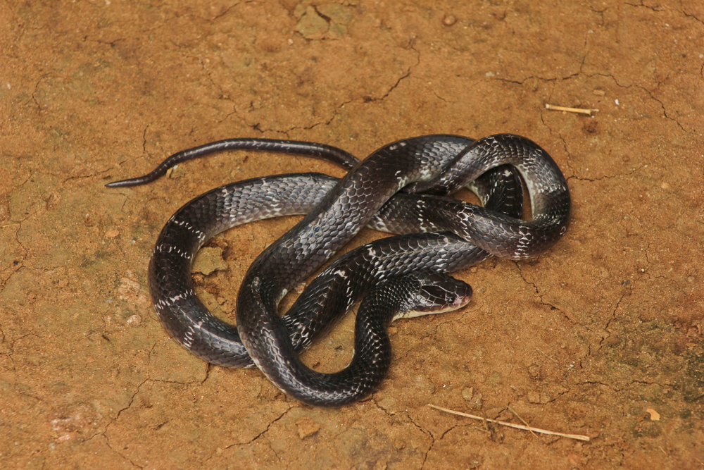 Почему змеи ядовитые.Вокруг Света. Украина