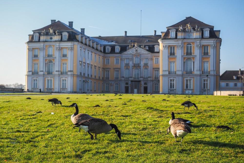 фото Кельн Аугустусбургский дворец