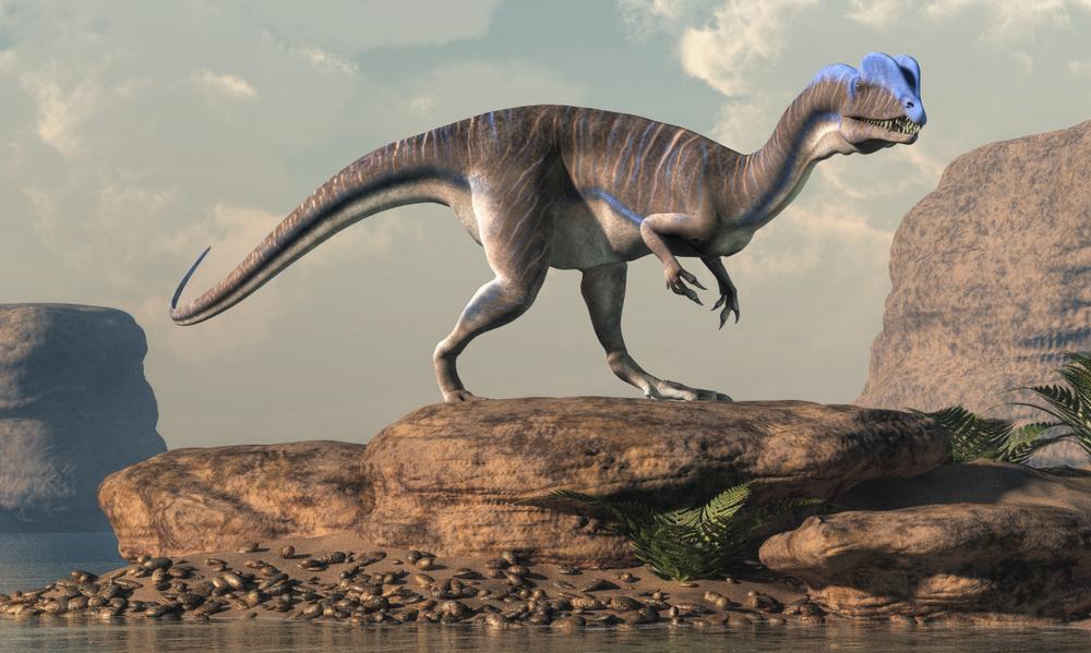 Шотландцы обнаружили полсотни окаменелых следов динозавров.Вокруг Света. Украина