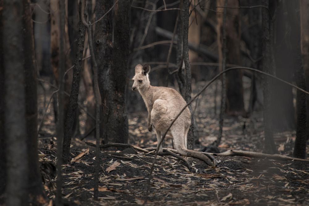 Изменение климата на 30% увеличило риск лесных пожаров в Австралии