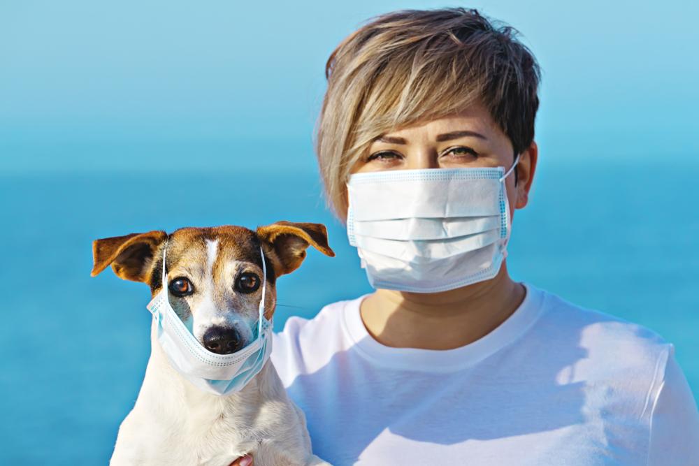 В Гонконге впервые выявили коронавирус у домашнего животного