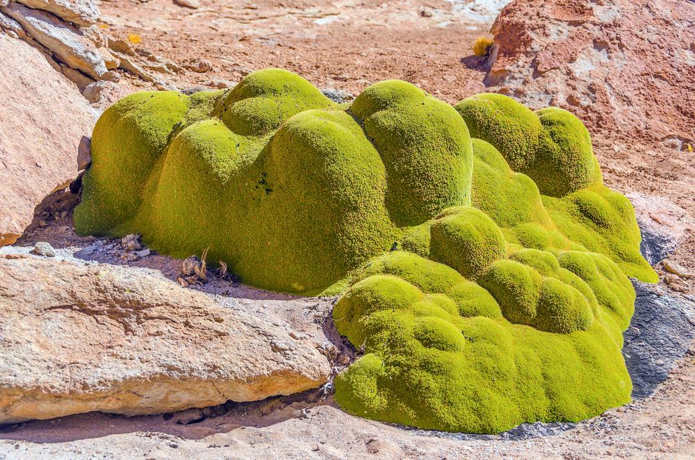 Топ-5: где растут древнейшие растения планеты?