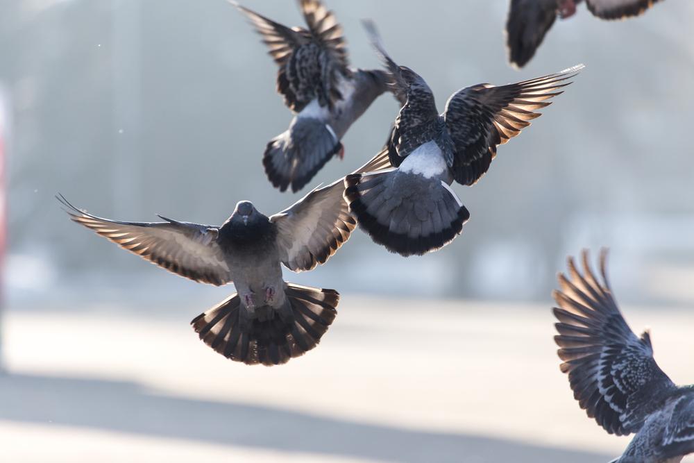 Большой мозг или большое потомство: у птиц есть две стратегии выживания в городах