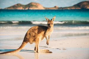 Лето в Австралии теперь вдвое длиннее зимы