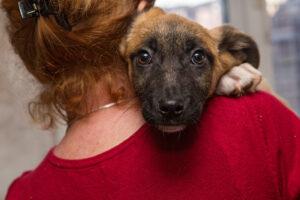 Жители Нью-Йорка стали массово забирать животных из приютов