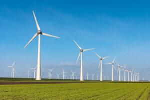 Возобновляемые источники энергии угрожают биоразнообразию