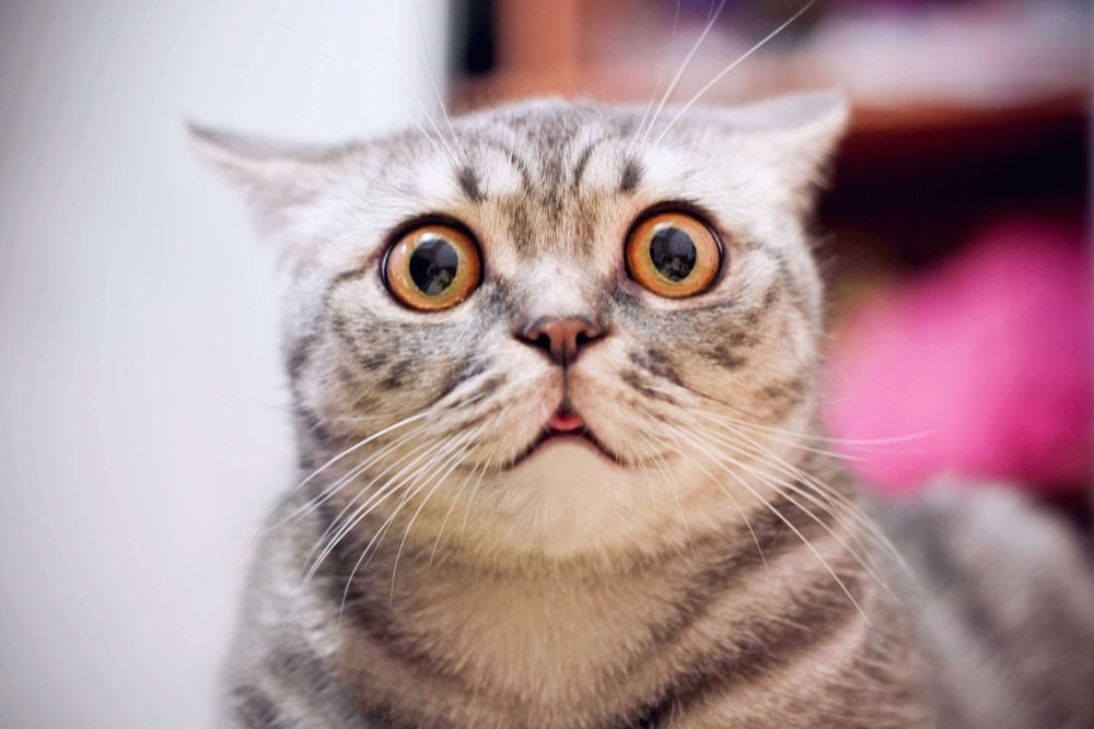 як бачать кішки