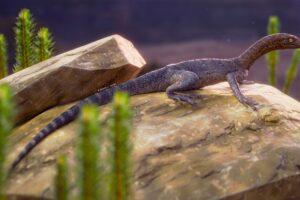 В Бразилии нашли окаменелости неизвестной рептилии возрастом 250 млн лет