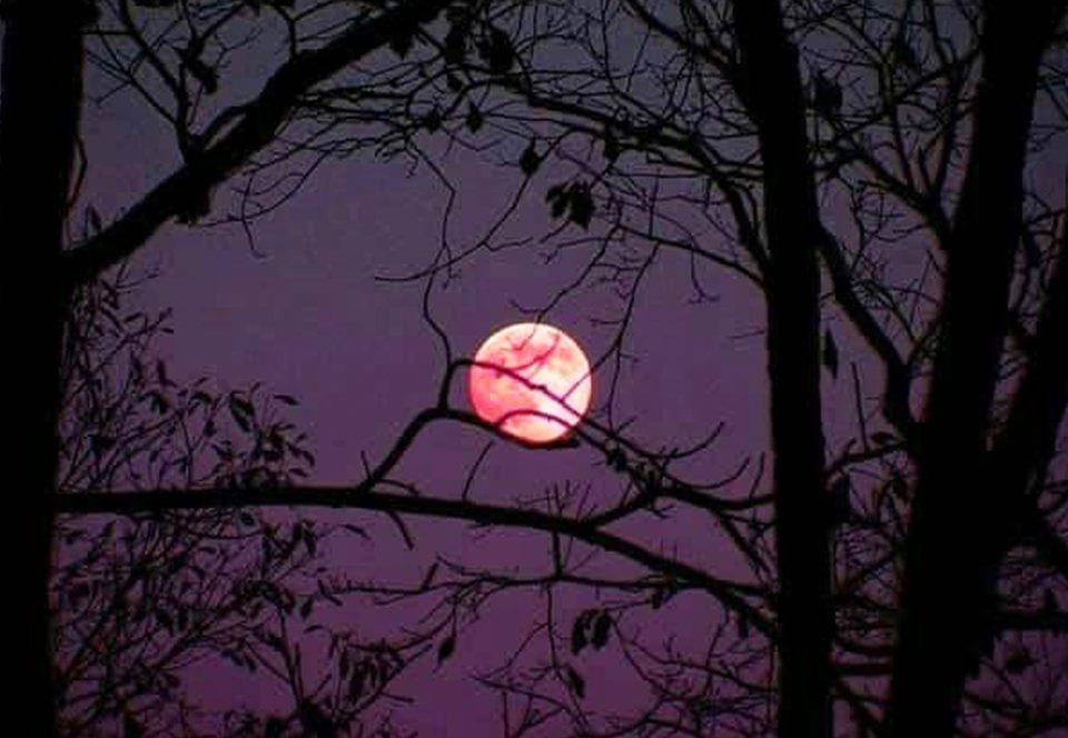 Ночью мир попал под обаяние розового суперлуния: фото