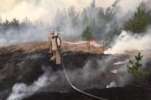 Пожары в Чернобыльской зоне: как из-за человеческой глупости гибнет природа