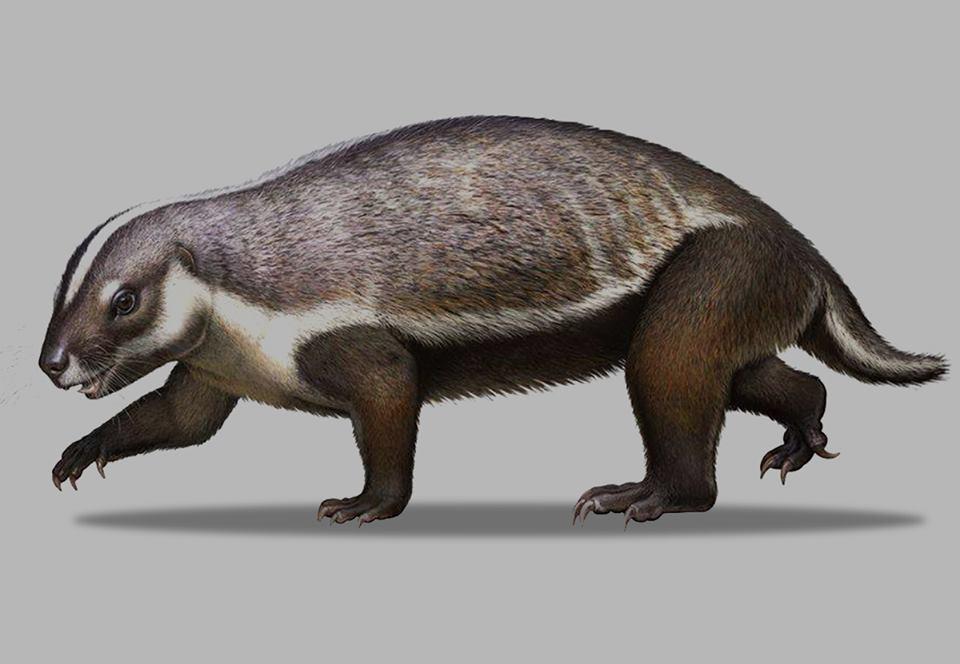 На Мадагаскаре нашли останки «безумного зверя» размером с кошку