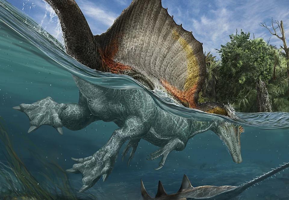 Палеонтологи установили, что спинозавры умели плавать
