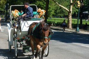 В Чикаго запретили кататься на конных экипажах