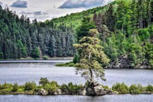 В Европе выбрали дерево 2020 года