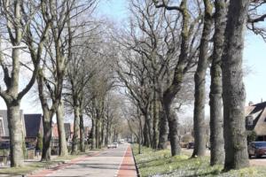 Карантин в Нидерландах: личный опыт
